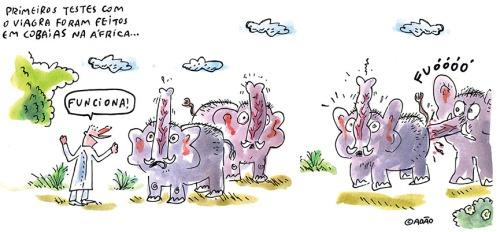 testes viagra elefantes