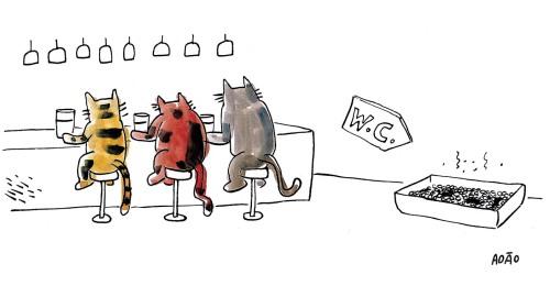 gatos bar wc banheiro.jpg